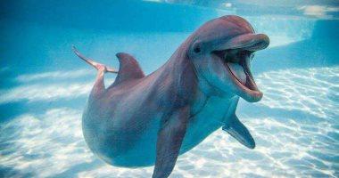 صور.. تعرف على حياة دلافين البحر الأحمر × 10 معلومات