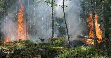 دراسة تحذر: إزالة الغابات فى الأمازون تؤدى لزيادة خطر الحرائق