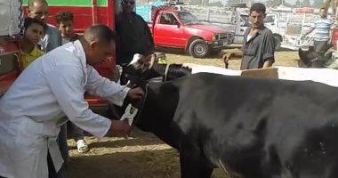 الزراعة تعلن ترقيم وتسجيل 138210 رأس ماشية وتأمين 52 ألف حيوان
