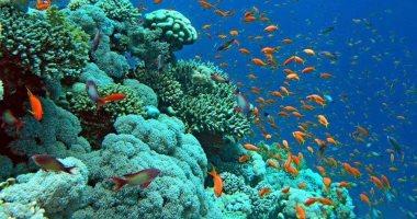 55 صورة تبرز جمال شواطئ البحر الأحمر.. وكائنات البحرية عالم آخر تحت الماء