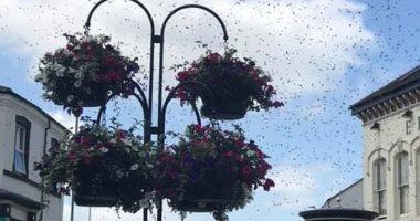 أسراب النحل تثير الرعب فى المملكة المتحدة.. اعرف التفاصيل