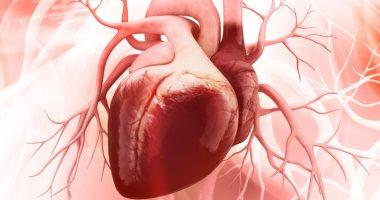 خدعوك فقالوا.. حقائق كاذبة تضر بصحة قلبك أكثر من الحفاظ عليها.. تعرف عليها