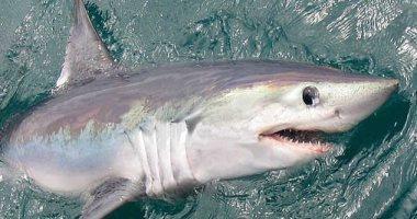 أسماك القرش تتعرض للتهديد بسبب وجود موائلها الطبيعية فى مناطق الصيد