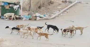 قارئ يشكو من انتشار الكلاب الضالة فى حي الهرم
