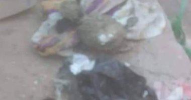 صور.. العثور على ورق سحر وعرائس ممزقة أثناء تطهير المقابر بقرية طنان بقليوب