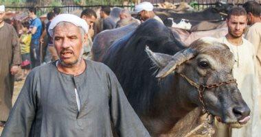 انتعاش أسواق المواشي استعدادا لعيد الأضحى المبارك