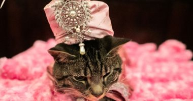 صور.. عرض أزياء القطط السنوى فى مانهاتن بنيويورك الأمريكية