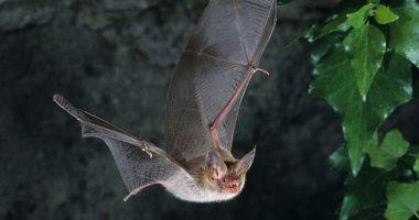 الخفافيش تستخدم أوراق الشجر مثل المرايا لتحديد مكان الفريسة فى الظلام
