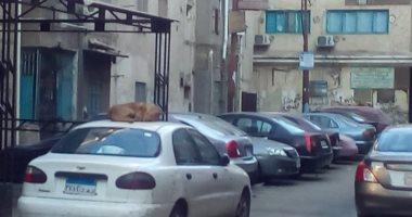 قارئ يشكو انتشار الكلاب الضالة بشارع التأمين الصحى بأسيوط