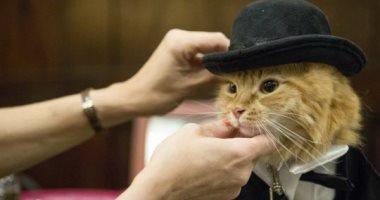 الـ catwalk بقى حقيقى.. تفاصيل عرض أزياء القطط بمدينة نيويورك