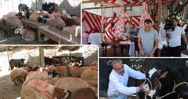 الأضاحى علامة مميزة للعيد فى مصر