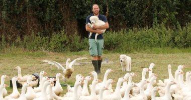 مزارع يجند كلبين لمهمة حراسة غير مألوفة فى مزرعة دواجن.. اعرف القصة