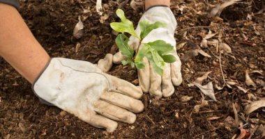 دراسة: زراعة الأشجار ليست بديلاً عن الغابات الطبيعية لمواجهة المناخ