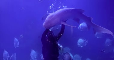 فيها حاجة حلوة.. السياح يشاهدون أسماك القرش من تحت الماء فى الغردقة