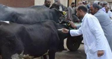 مدير الإنتاج الحيوانى بدمياط: أسعار الأضاحى أقل من العام الماضى لكثرة المعروض