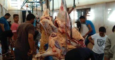 مجازر القليوبية تستقبل 500 رأس أضحية حتى الآن فى عيد الأضحى المبارك