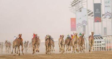 انطلاق مهرجان للهجن فى السعودية بمجموع جوائز 53 مليون ريال