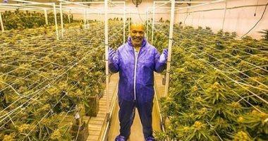 مايك تايسون يدخن 10 أطنان من الماريجوانا شهريا من مزرعته التي تبلغ 420 فدانا