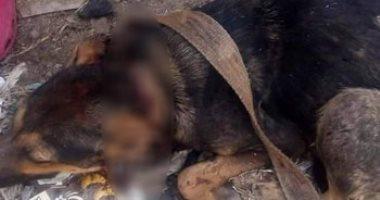 التحفظ على جزار بمركز الزقازيق بتهمة تعذيب كلب