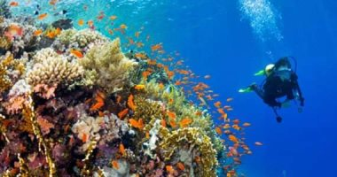 شاهد جمال شعاب كارلس رييف أحد مواقع الغوص العالمية الشهيرة بالبحر الأحمر
