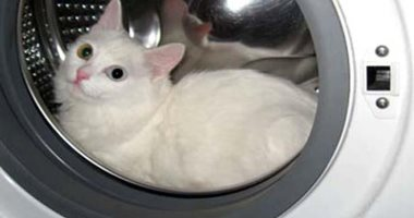 شقاوة حيوانات.. يحطم باب الغسالة الكهربائية لإنقاذ قط من الموت