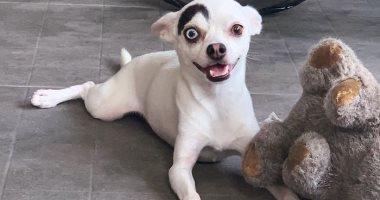 مش لون واحد.. كلب يولد بعين سودا وأخرى زرقا