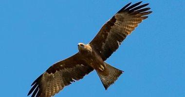 بسبب تغير المناخ.. نوع من الطيور يتكاثر في بريطانيا لأول مرة