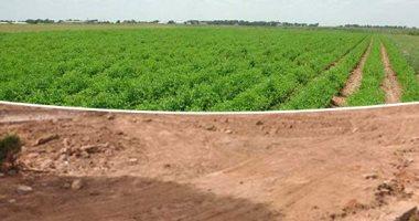 أستاذ الاقتصاد الزراعى يوضح خطورة التعديات على الأراضى الزراعية