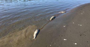 شاهد: ظاهرة الاحتباس الحرارى تتسبب فى قتل الأسماك بألاسكا