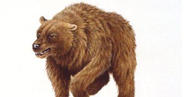 البشر مسئولون عن انقراض دب الكهف.. اعرف التفاصيل