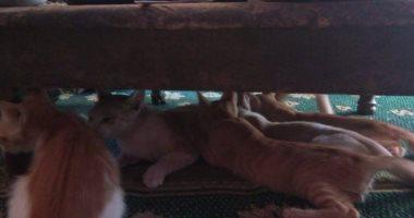 قارئ يشارك بصورة لـ قطة ترضع صغارها تحت الطبلية.. فى اليوم العالمى للتصوير