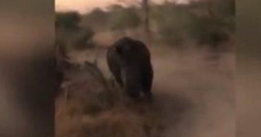 وحيد قرن يطارد سياح فى جنوب افريقيا