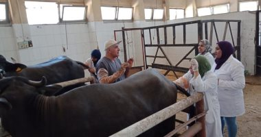 صور.. نقابة البيطريين تنظم دورة تدريبية حول التلقيح الاصطناعى