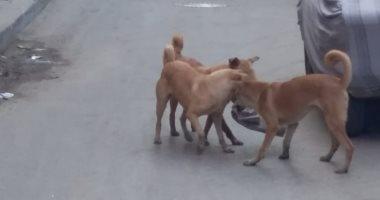 أهالى روض الفرج يناشدون رئيس الحى إنقاذهم من الكلاب الضالة