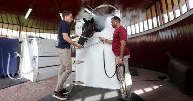 تقنية جديدة لتبريد الخيول فى سباقات دبى عبر النيتروجين