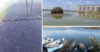 الثروة السمكية - صورة أرشيفية