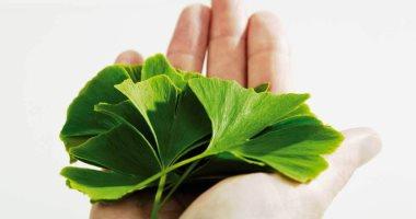 دراسة مصرية سعودية: نبات الجنكة بيلوبا يساعد فى علاج مرض السكر من النوع 2