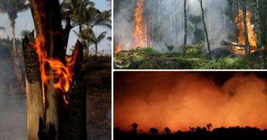 دراسة تشكك فى قدرة غابات الأمازون بعد إعادة نموها على مكافحة تغير المناخ