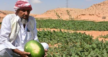 أمطار الخير.. التين والزيتون والبطيخ أهم الزراعات على الأمطار بوديان مطروح.. صور