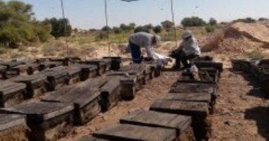صور.. إنتاج العسل من عمق الصحراء مشروع ناجح لشاب سيناوى