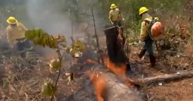 خبراء: البرازيل تسجل أكبر عدد من الحرائق في الأمازون منذ عام 2007