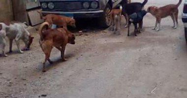 قارئة تشكو انتشار الكلاب الضالة بسيدى بشر فى محافظة الإسكندرية