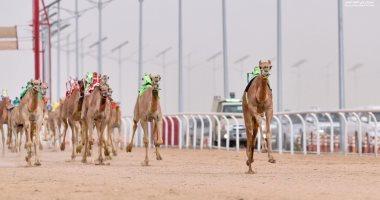 """""""شبرية"""" أغلى ناقة بمبيعات سباق ولى العهد للهجن بالسعودية بـ4.6 مليون ريال"""
