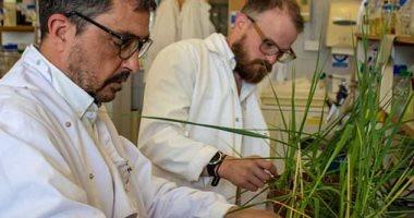 الزراعة: دورة تدريبة لمكافحة أمراض المحاصيل والحد من المبيدات الأحد