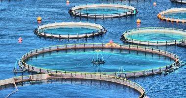 6 يونيو.. نظر دعوى عدم دستورية لائحة العاملين بهيئة الثروة السمكية