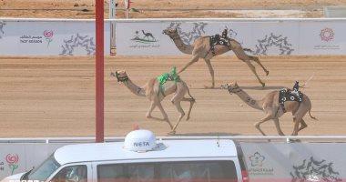 صور.. نتائج سباقات اليوم للهجن بميدان الطائف بالسعودية