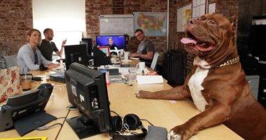لو مديرك وافق.. اعرف اتيكيت اصطحاب الكلب لمكتب العمل