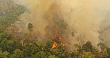 حرائق غابات الأمازون تهدد 265 نوعًا من النباتات والحيوانات