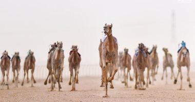 صور .. نتائج سباق الهجن على مسافة 5 كم بمهرجان ولى العهد بالسعودية