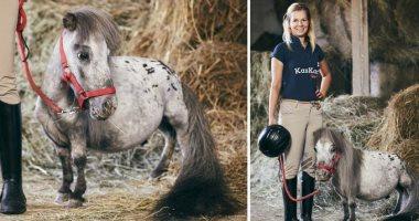 """موسوعة """"جينيس"""" تعلن عن أقصر حصان فى العالم بطول 56 سم"""